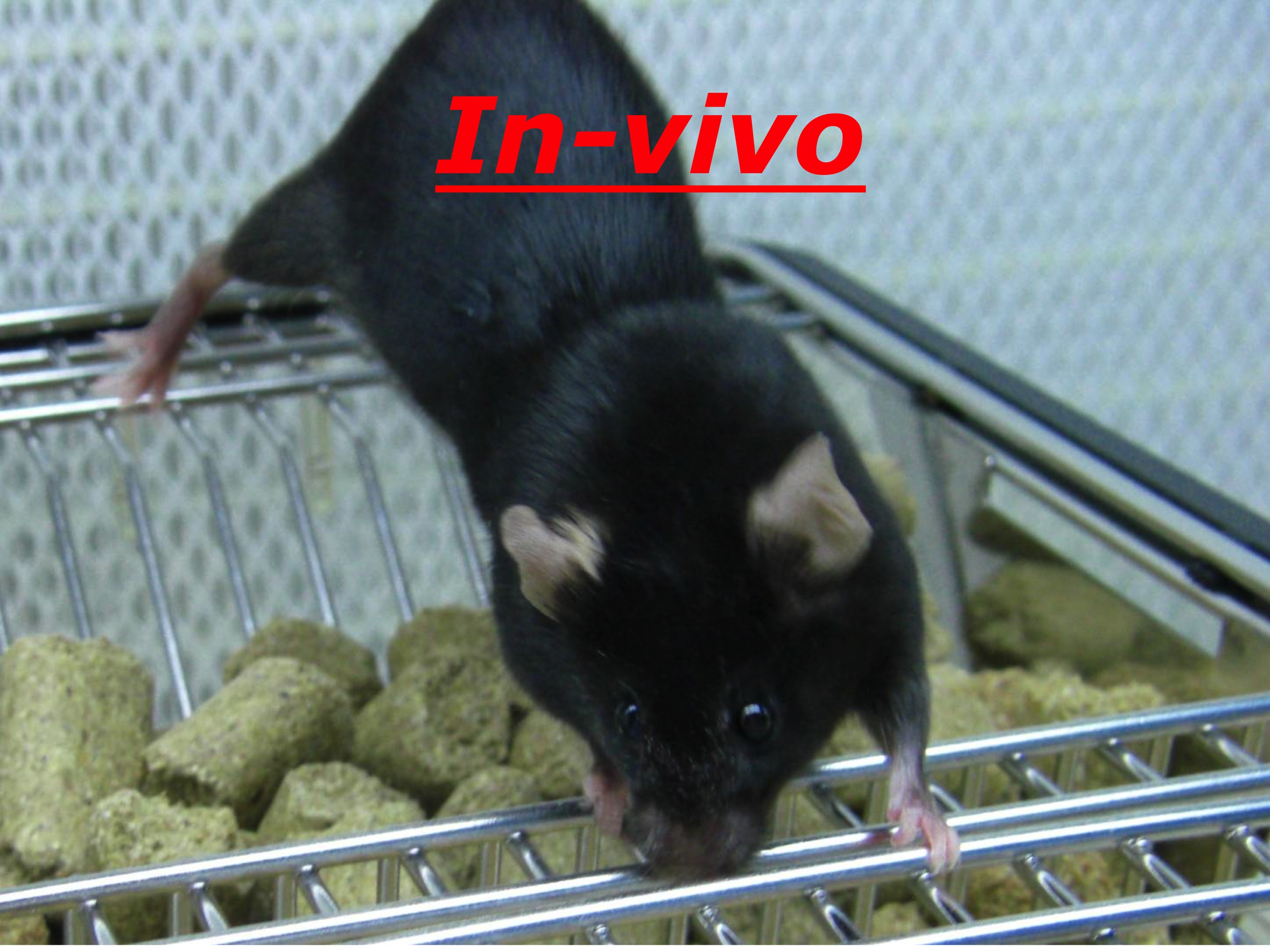p48 in vivo mouse