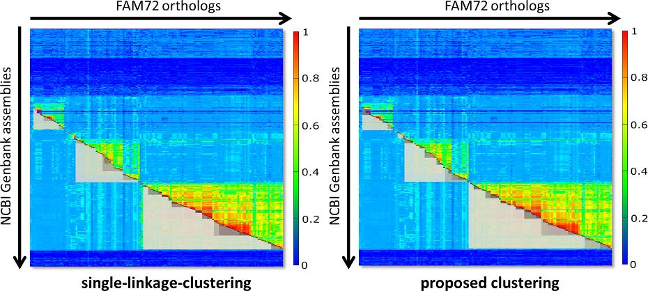 FAM72 clustering comparison