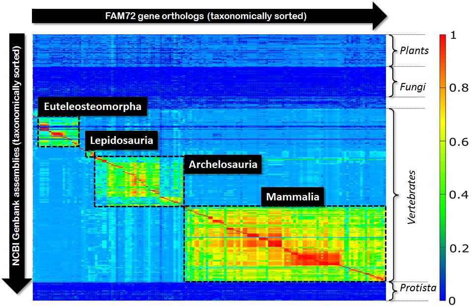 fam72-matrix